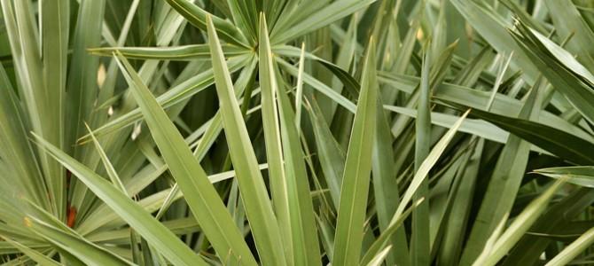 Dalle piante di palude tanti contenitori per tutte le esigenze