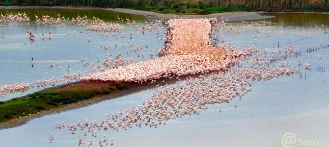 The Molentargius, the kingdom of the flamingo and of the purple gallinule