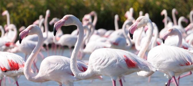 La région d'Oristano, la plus riche en étangs et lagunes