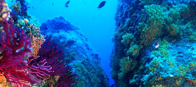 La Zone Marine protégée de Capo di Carbonara