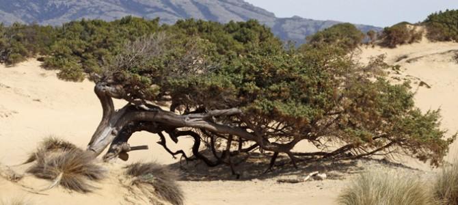 Costa Verde, tra promontori e distese dunose