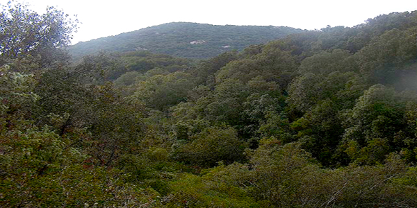 Foresta Gutturu Mannu – Parco regionale del Sulcis