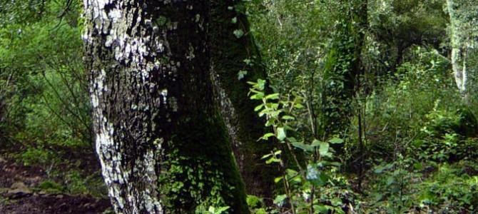Foresta demaniale Marganai, una vegetazione folta e rigogliosa