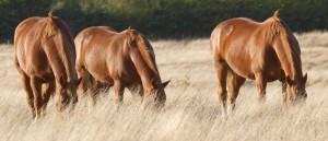 Fiera del cavallo in Sardegna