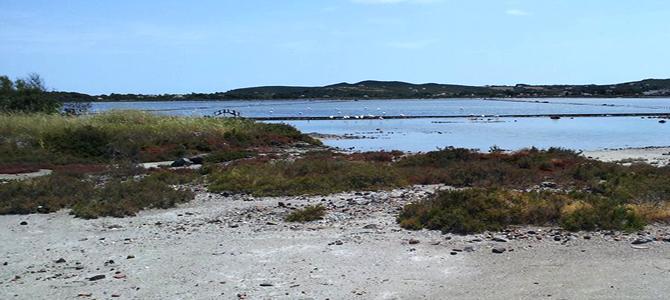 L'oasi Lipu di Carloforte