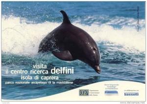 Centro Ricerca Delfini a Caprera