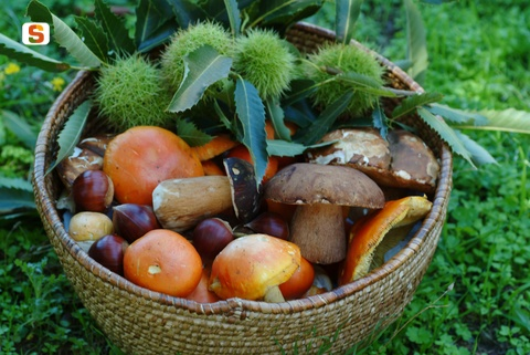 Cestino Castagne e Funghi